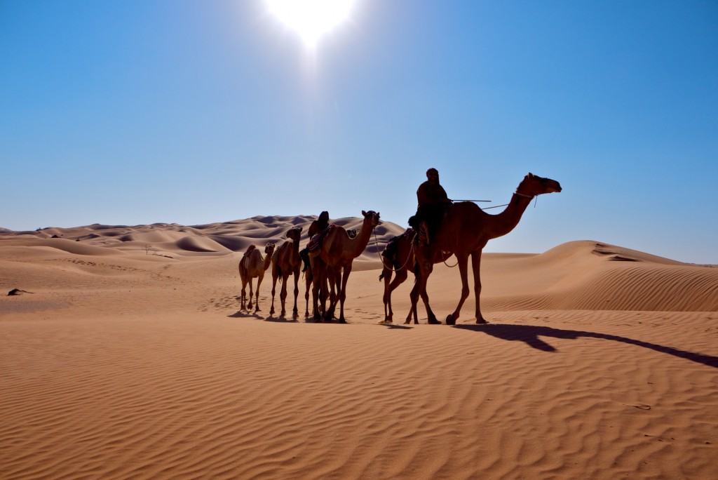 desierto camello