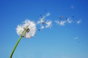 DLVlbyaB-photo-pollens-s-