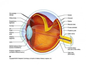 5 sentidos la vision