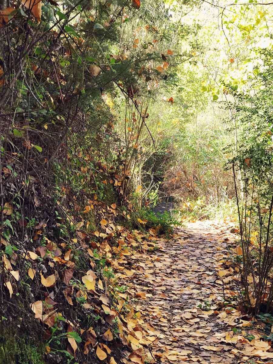 Descansa Desconecta Y Disfruta Del Bosque De Cobre En Malaga Charhadas