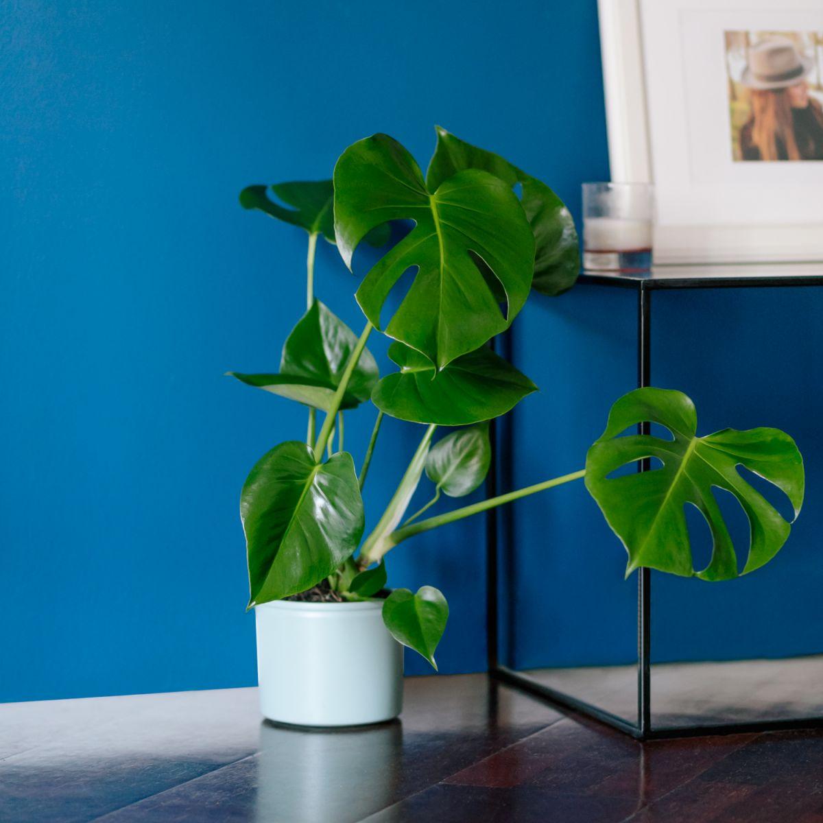 Un jardín en casa con plantas de interior